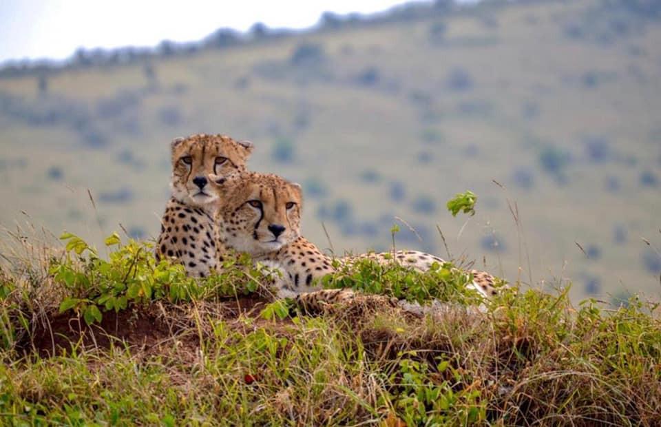Cheetah Safari Trail 4 Days 1