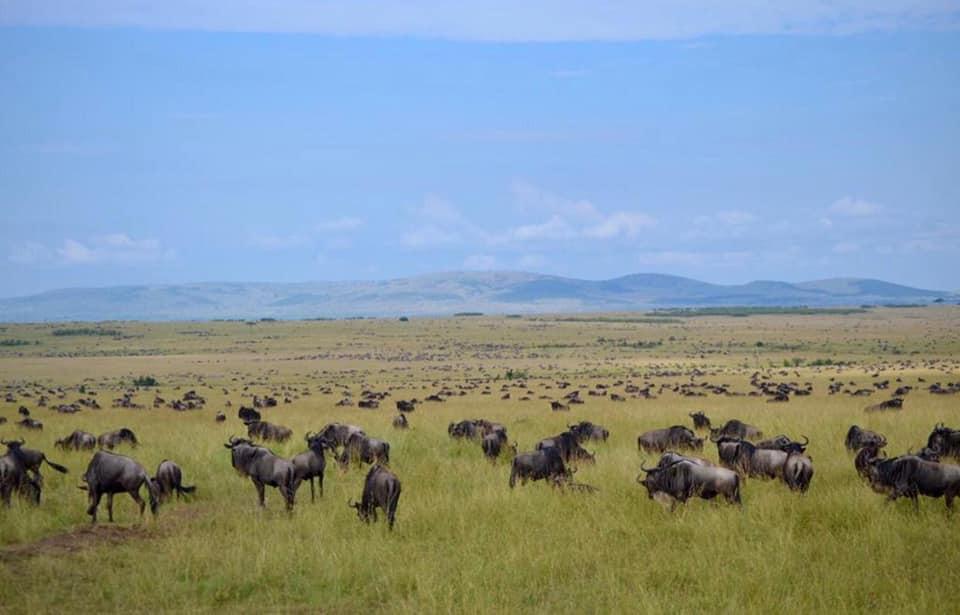 Cheetah Safari Trail 4 Days 2