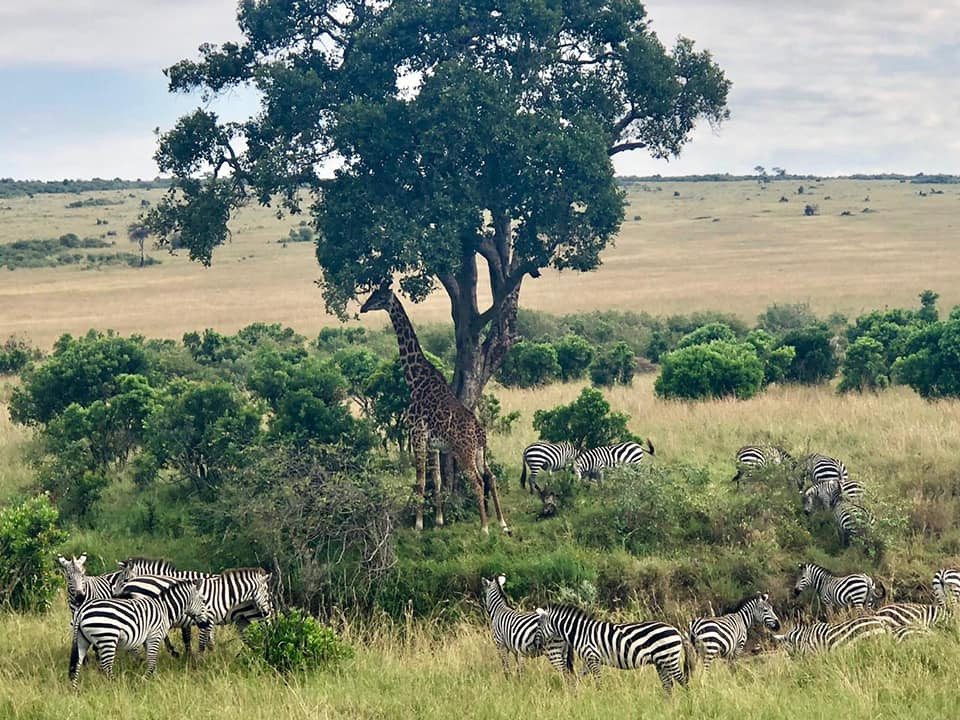 7 days Wonders of Kenya Wildlife 5