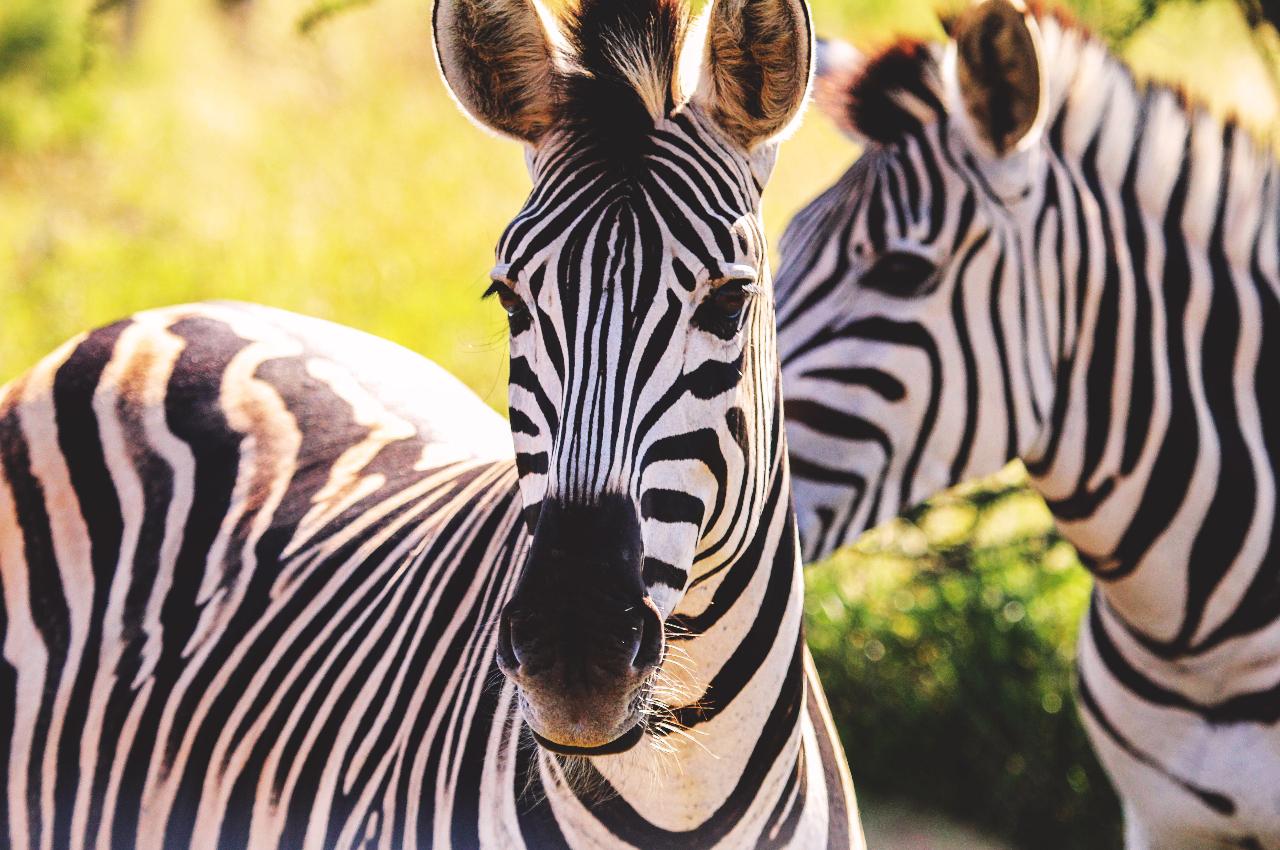 African Safari to Kenya Tanzania and Zanzibar 1