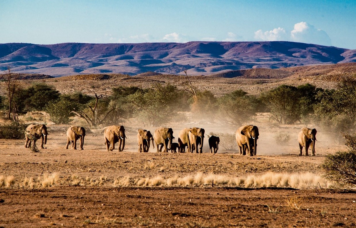 Namib Desert and Etosha National Park Camping Safari 1