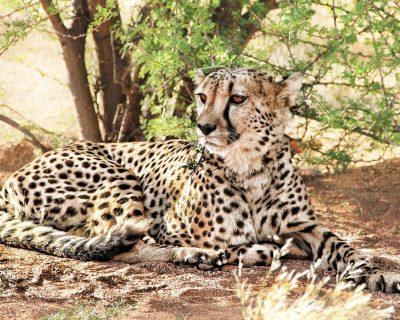 Swakopmund in Namibia 5