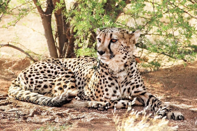 3 Days Namib Desert - Sossusvlei Camping Safari 1
