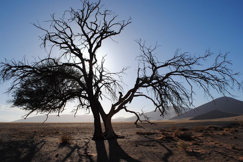 3 Days Namib Desert Accommodated Safari 1