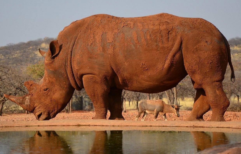 3 Days Etosha National Park Safari 1