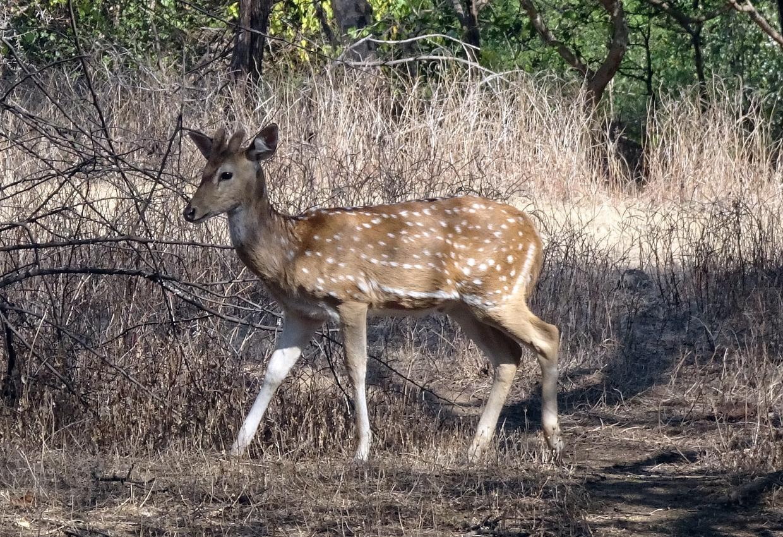 Sunderban National Park