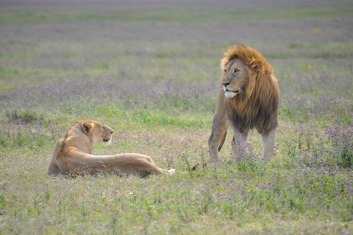 The Journey to Tanzania Wildebeests 4