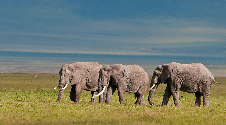 The Journey to Tanzania Wildebeests 5
