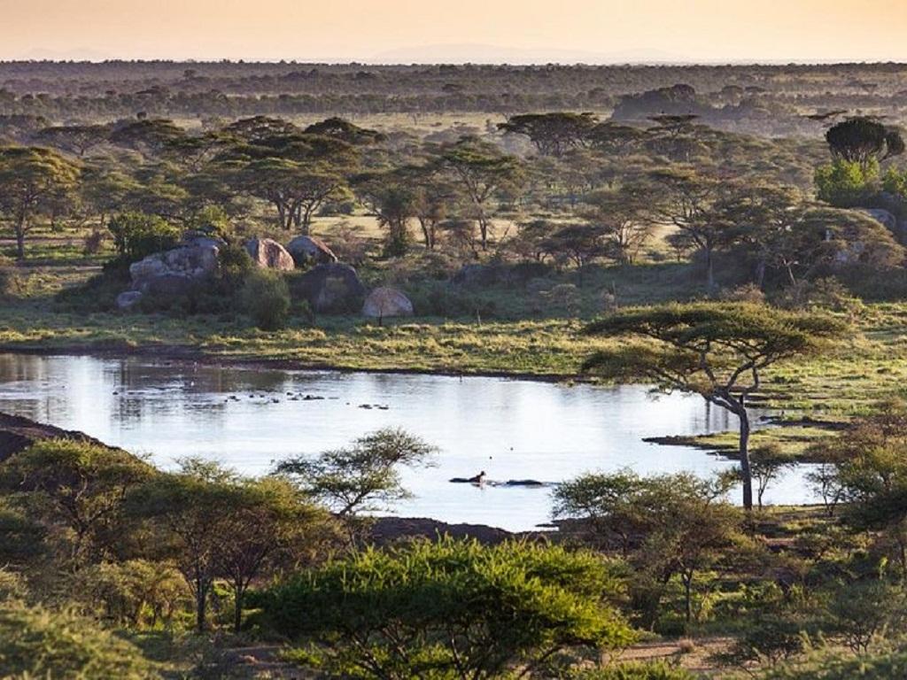 The Ultimate Migration Safari Tour 5