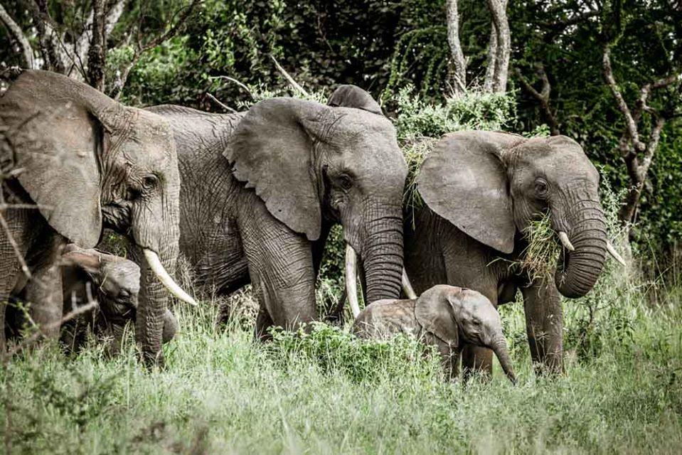 The Ultimate Migration Safari Tour 4