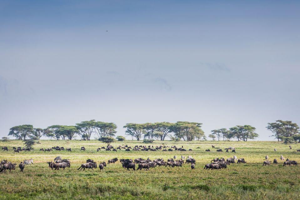 Tanzania Migration 1