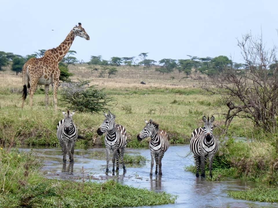 Tanzania Migration 5