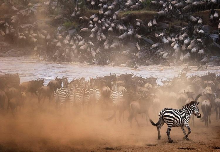 The Ultimate Migration Safari Tour 1