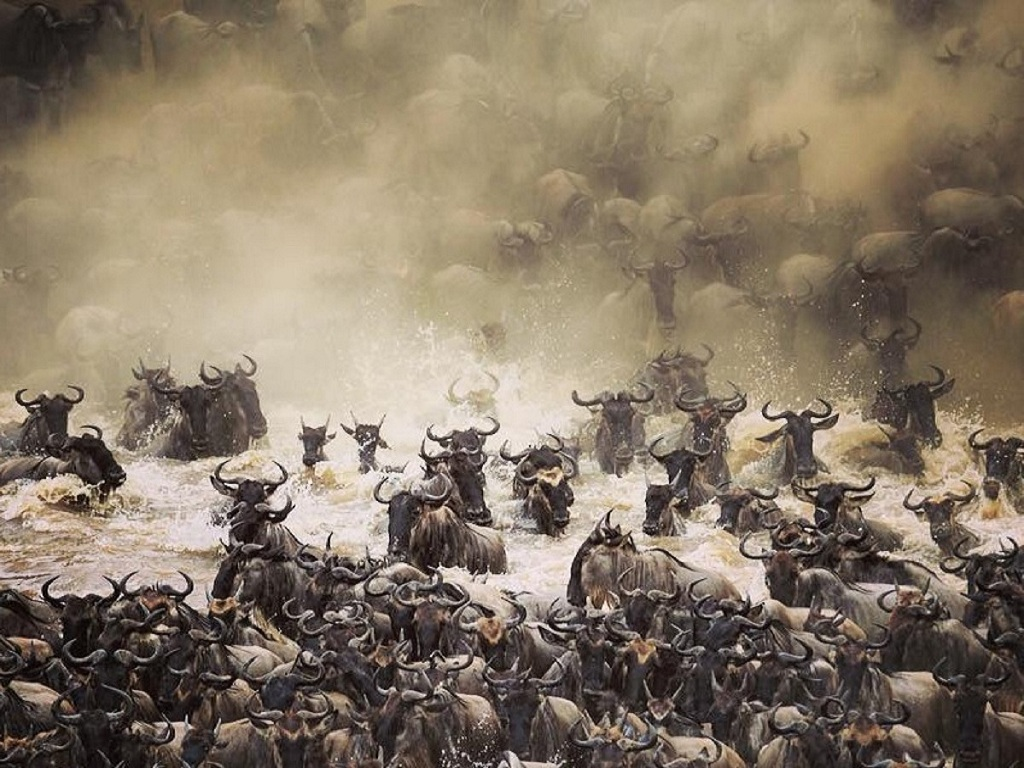 The Ultimate Migration Safari Tour 2