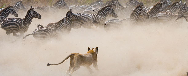 The Ultimate Migration Safari Tour 3