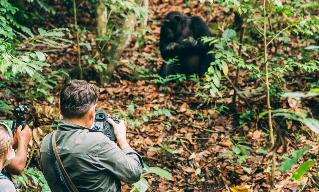 Tanzania Chimpanzee Safari Tour 2