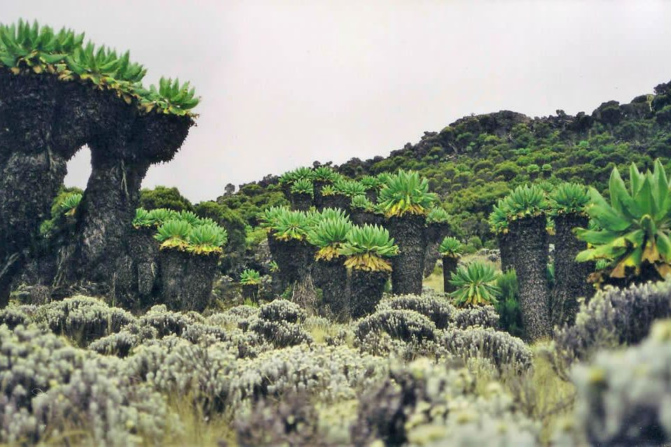 10 Day Kilimanjaro Climb - Lemosho Route 5