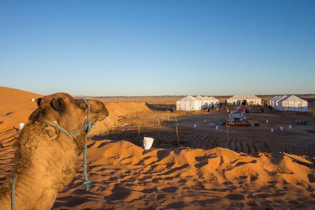 #Desert Tour