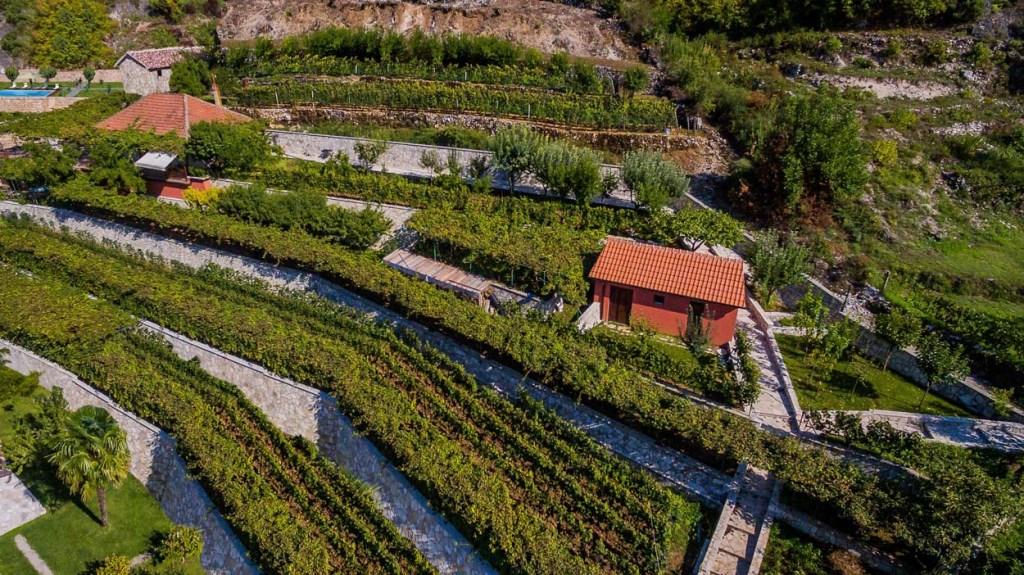 Crmnica Wine Tour 3