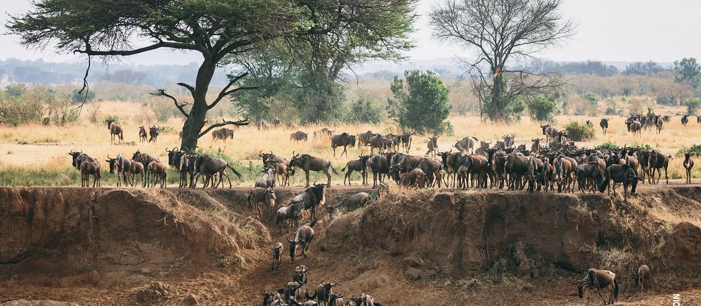Tanzania Camping Safari To Serengeti and the Ngorongoro Crater 2