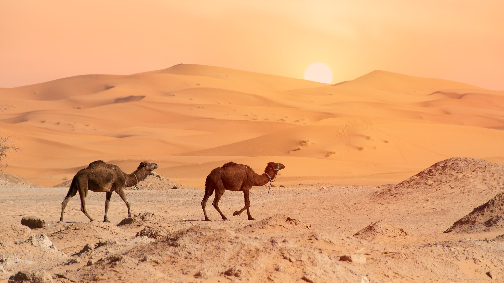 3 Days 2 Nights Private Trip from Marrakech to Fes via Sahara Desert