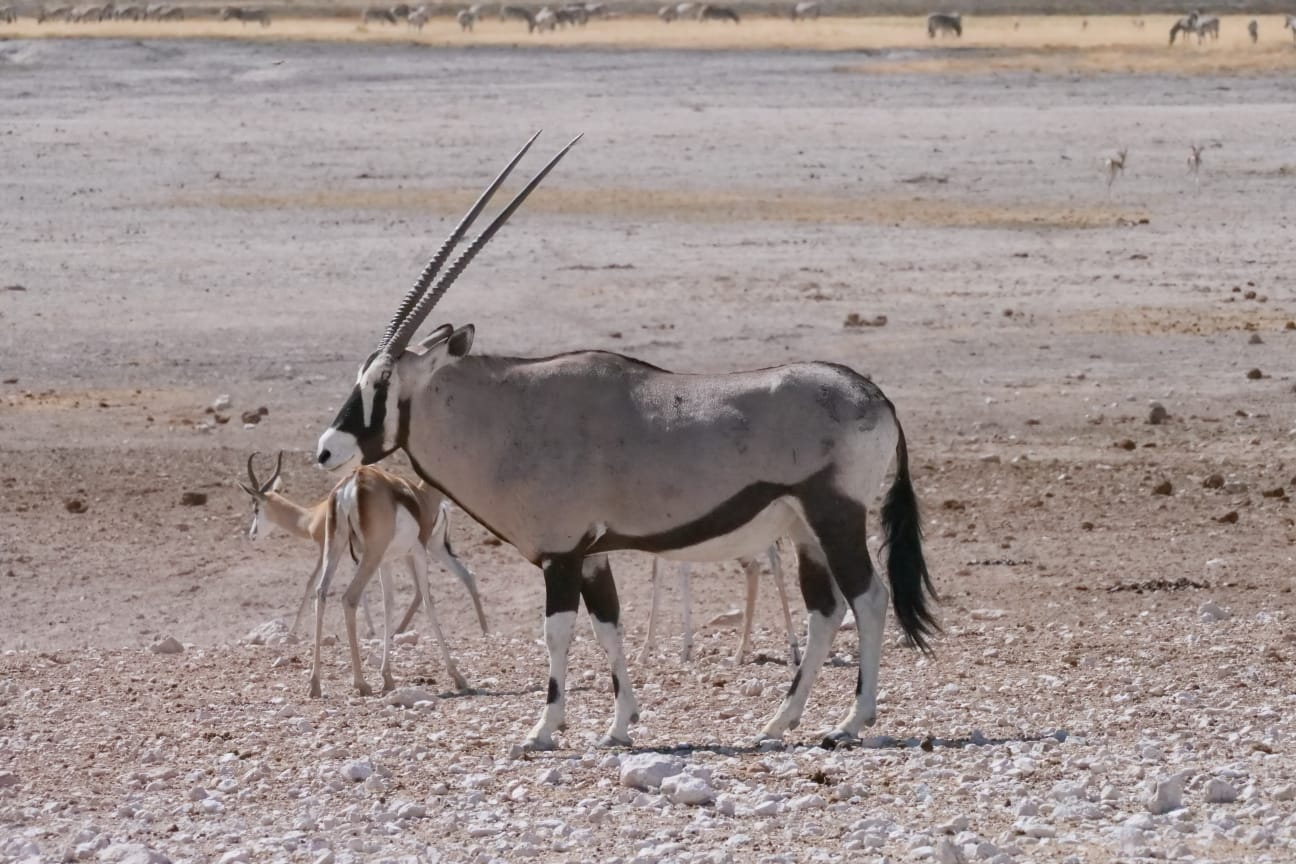 Best of Namibia in 11 Days 1