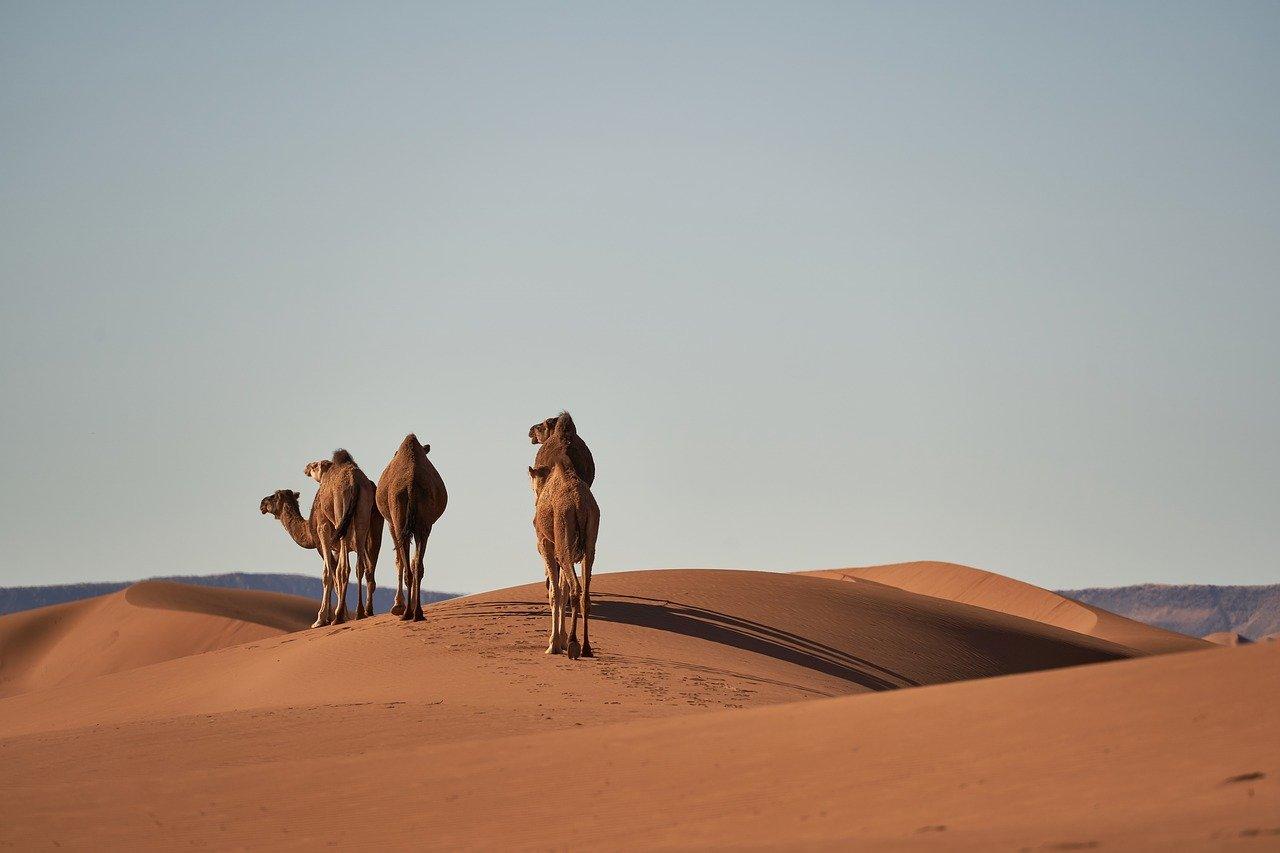 Casablanca Tour Package - 8 Days Imperial Cities & Sahara Desert 8