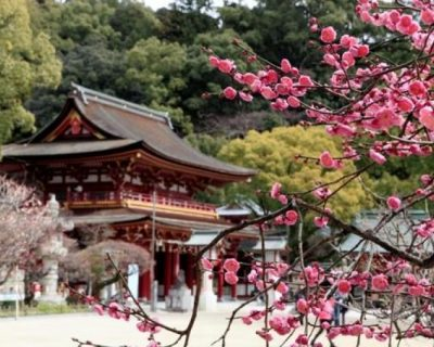 Japan Travel Guide 3