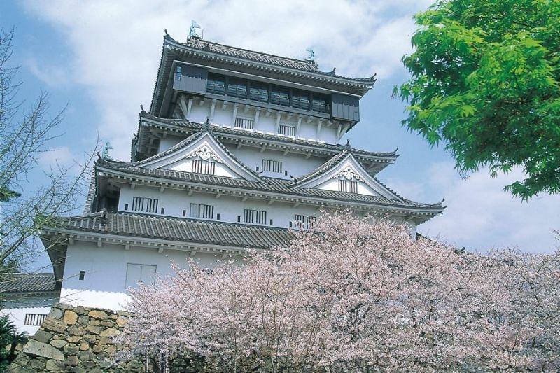 Cherry Blossoms at Fukuoka and Kumamoto 2