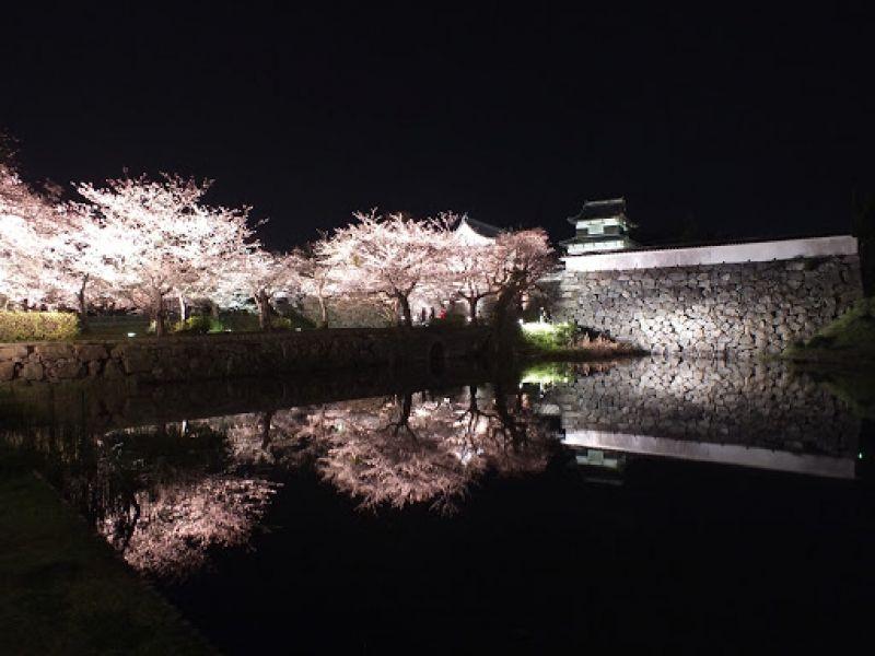 Cherry Blossoms at Fukuoka and Kumamoto 3