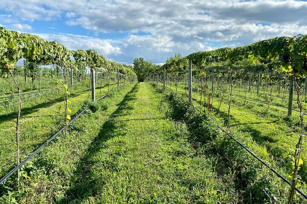 Full-Day Walkway Over the Hudson and Winery Tour 6