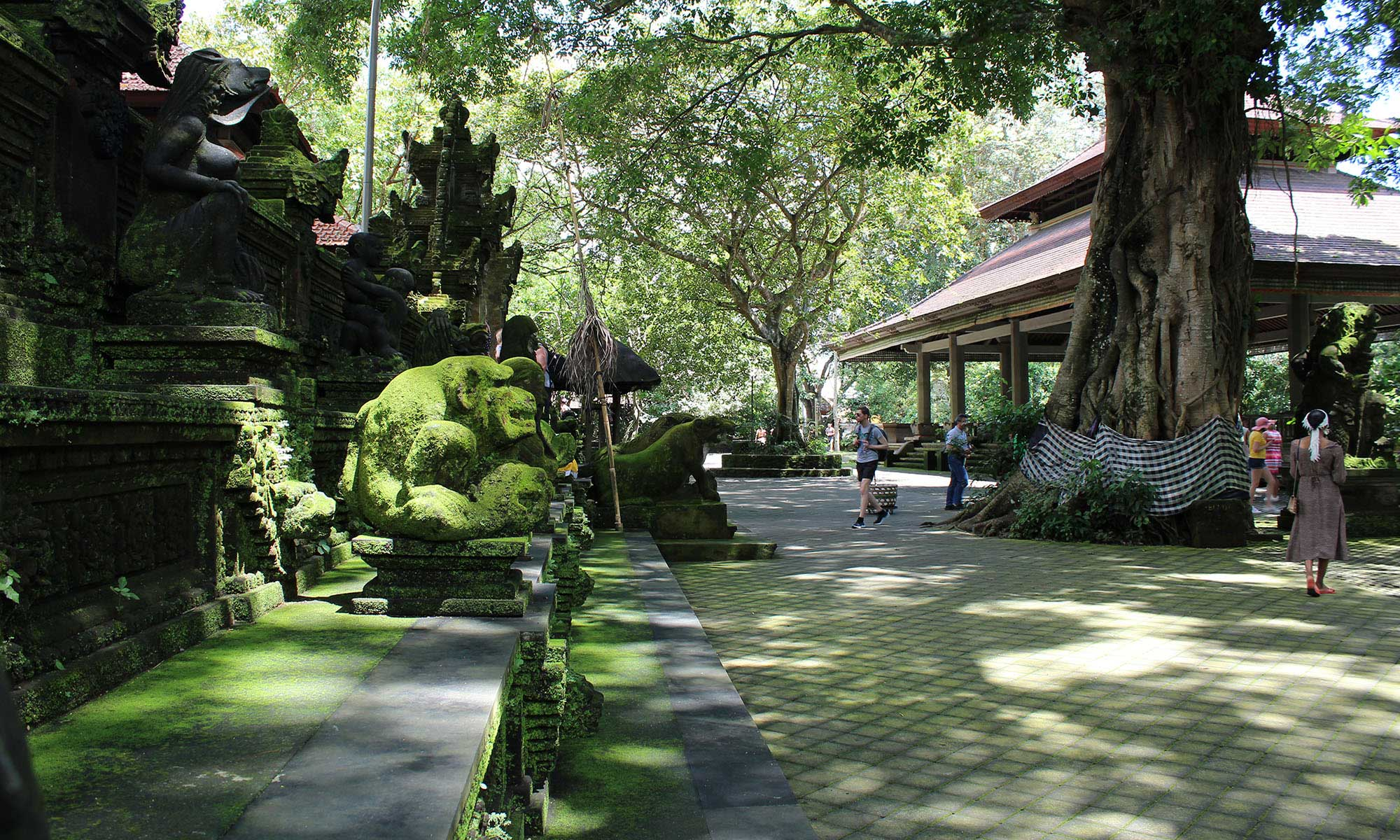 Ubud Highlights Private Tour with Swing 2