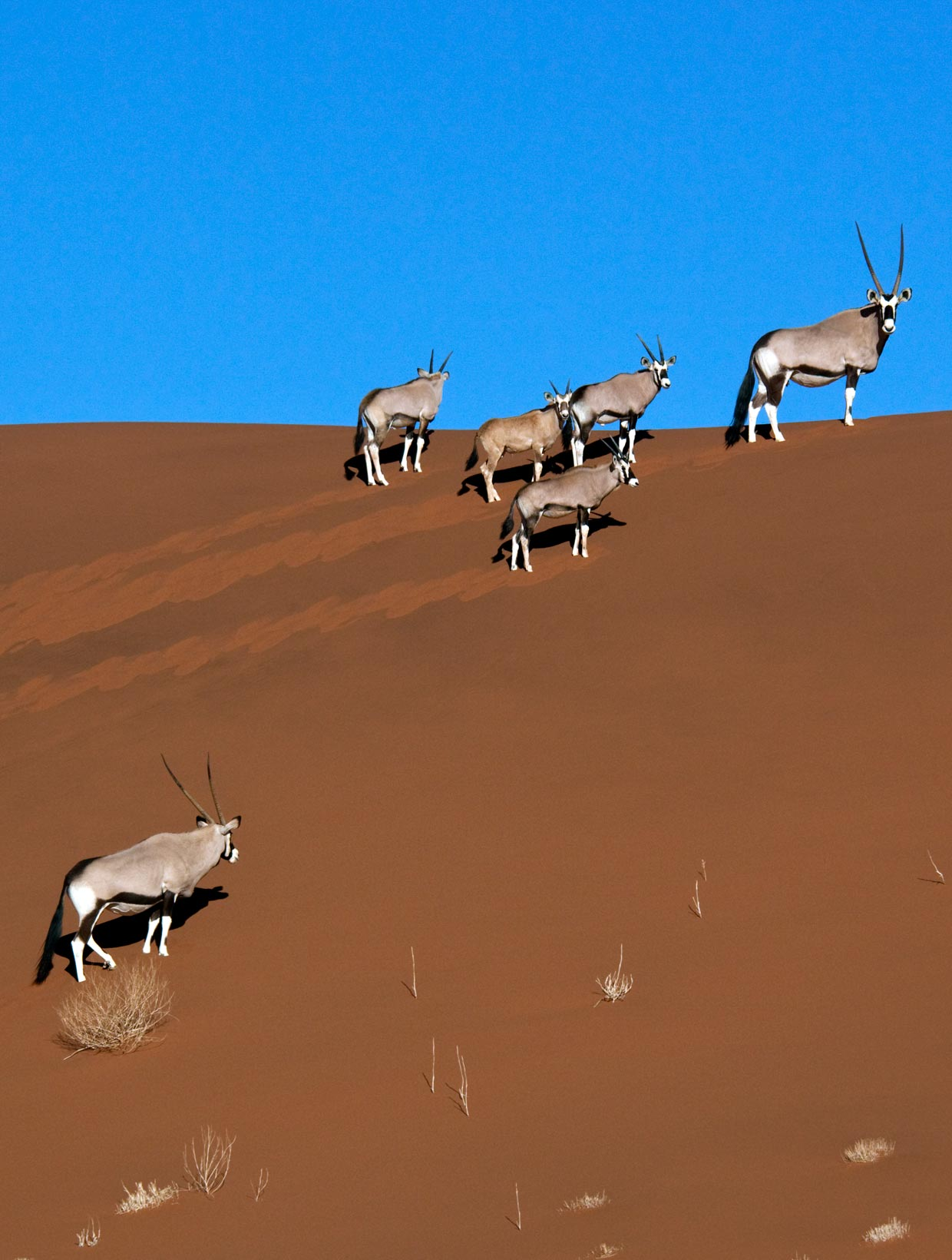 Wildlife in Sossusvlei