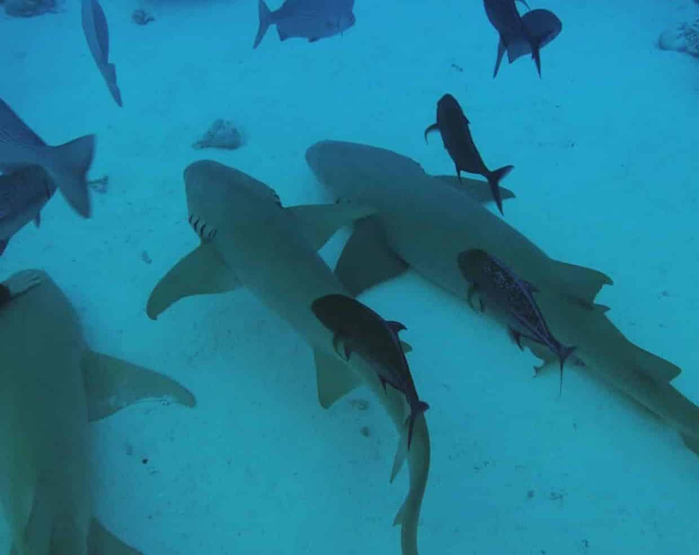Maldives Discovery Safari Cruise Tour (All-Inclusive) 7