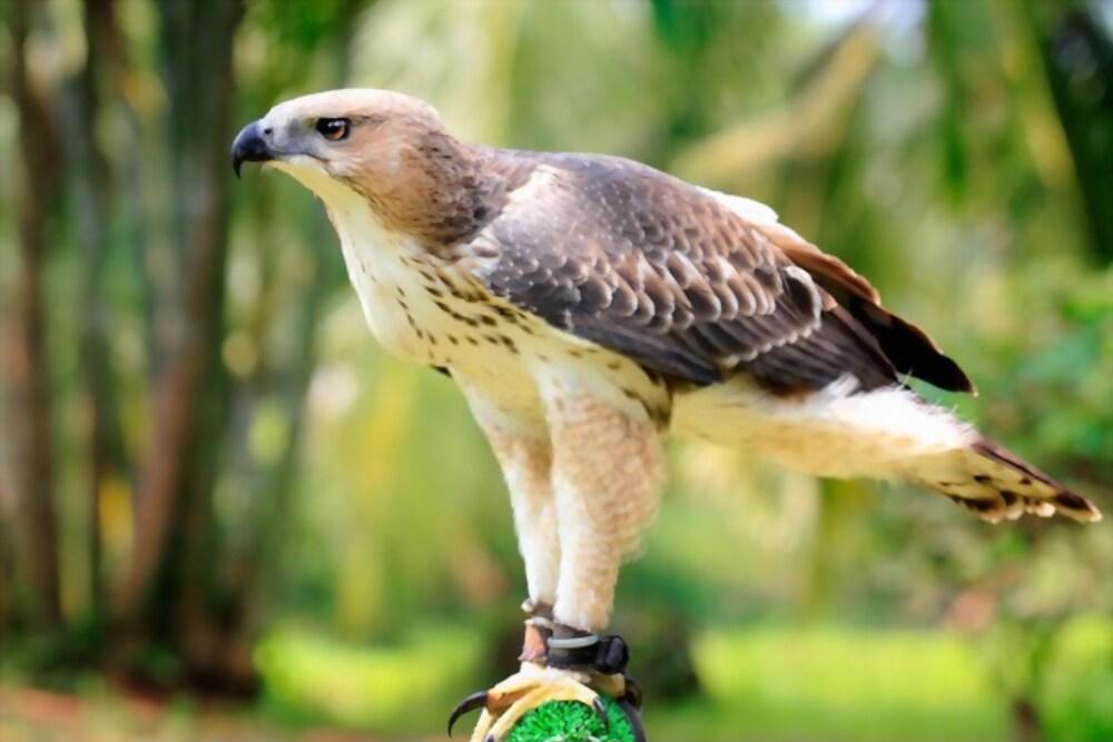 36 Day Birding Sanctuary Safari in Sri Lanka National Park 1