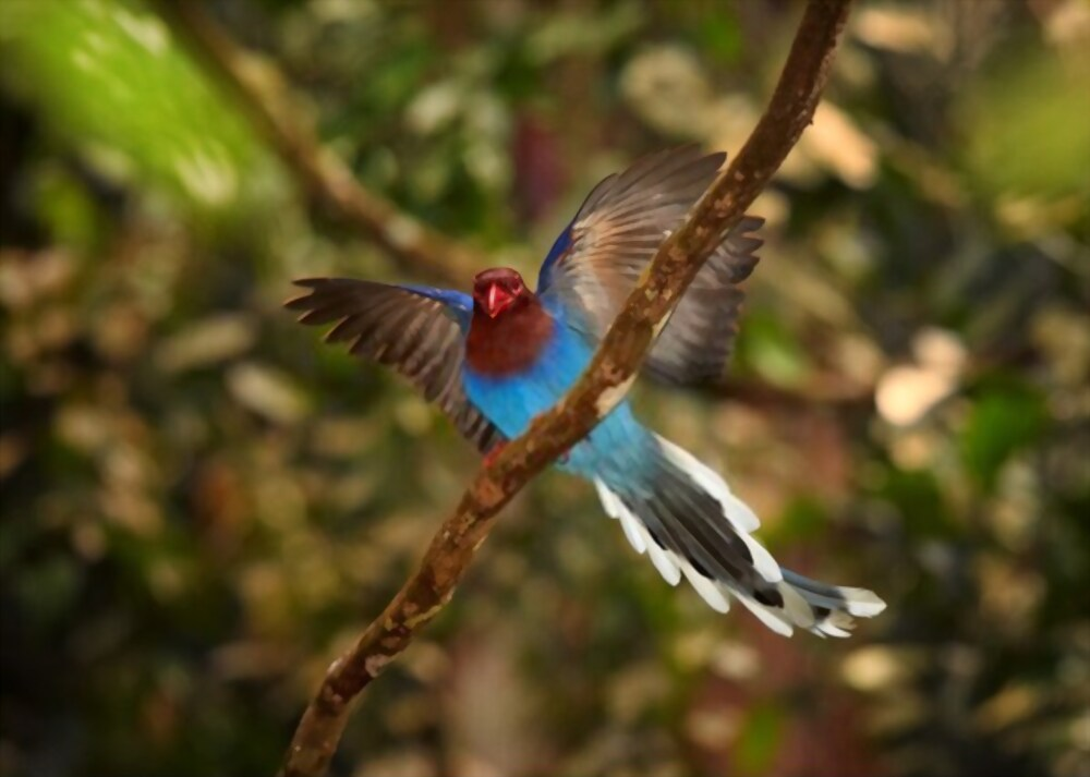 36 Day Birding Sanctuary Safari in Sri Lanka National Park 5