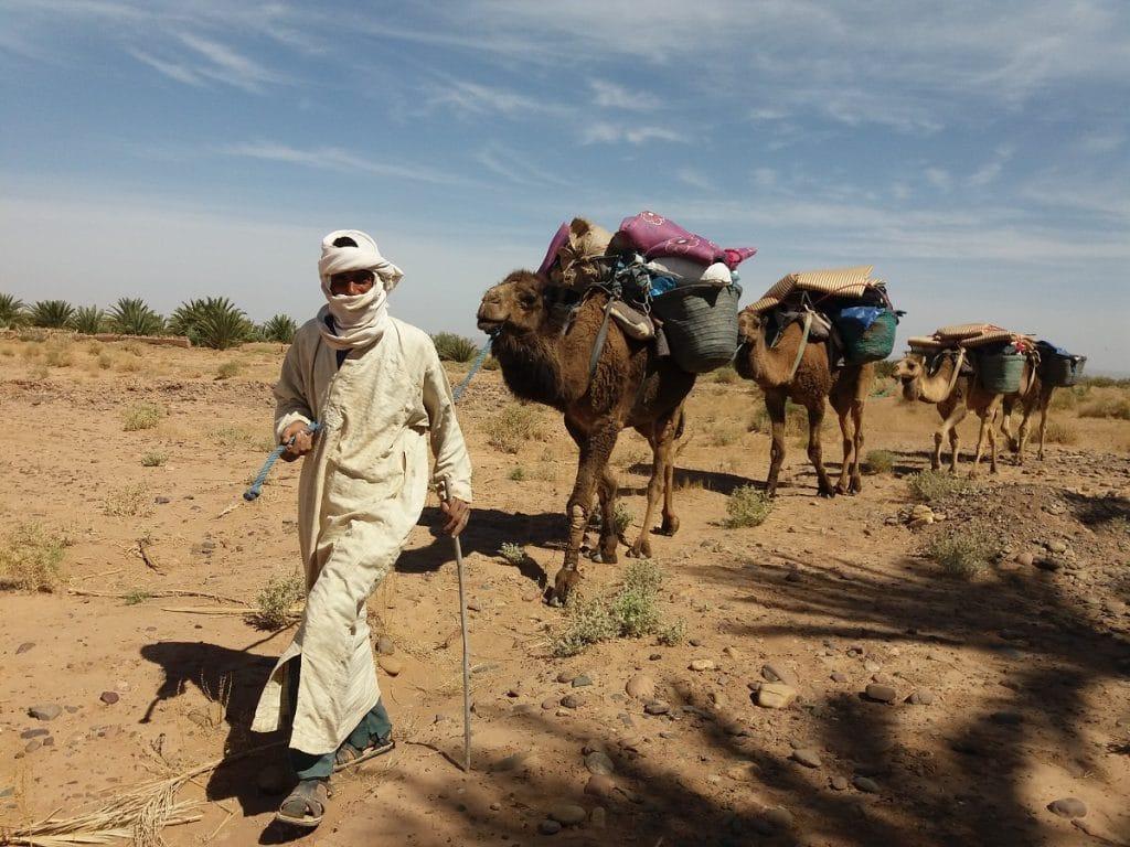 M'hamid Palms and Dunes Trekking Tour 3