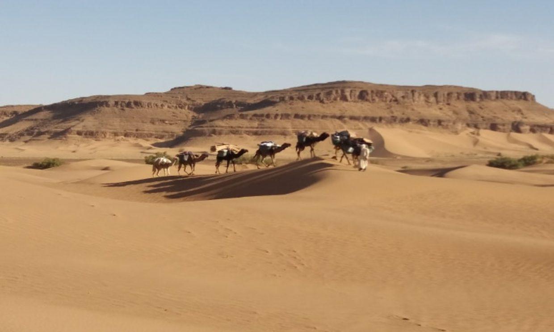 M'hamid Palms and Dunes Trekking Tour 4