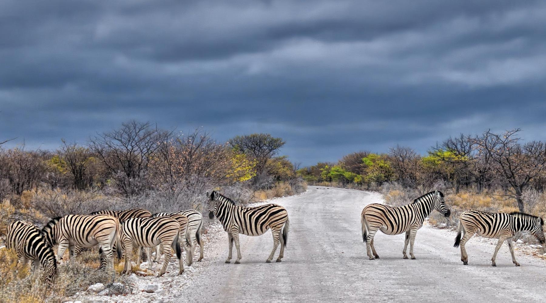Etosha National Park – The World of Rare Animals in Namibia