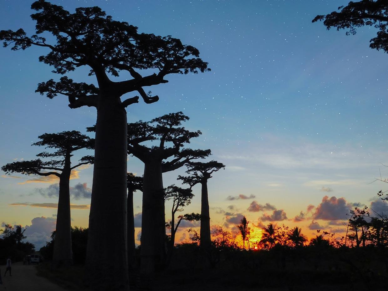 Baobabs Avenue Madagascar