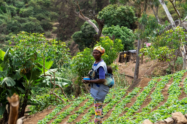 Cape Verde: Best Trails of Santiago and Fogo Islands 5