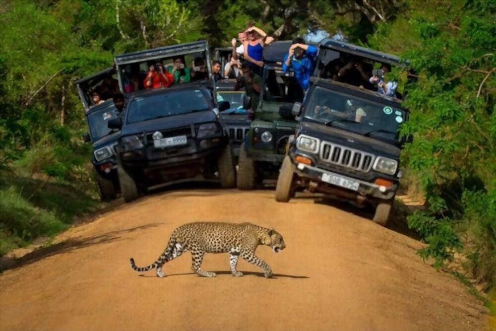 Exploring Leopard's with Wild Bush Camping in Sri Lanka 2