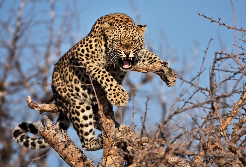 Exploring Leopard's with Wild Bush Camping in Sri Lanka 4