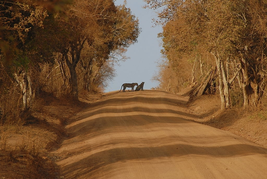 Exploring Leopard's with Wild Bush Camping in Sri Lanka 7