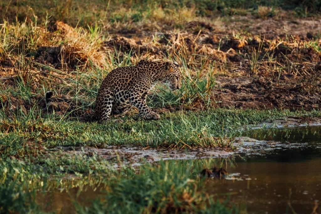 Exploring Leopard's with Wild Bush Camping in Sri Lanka 8
