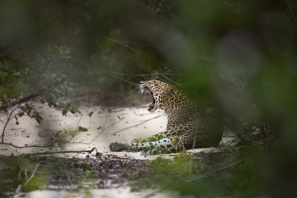 Exploring Leopard's with Wild Bush Camping in Sri Lanka 9
