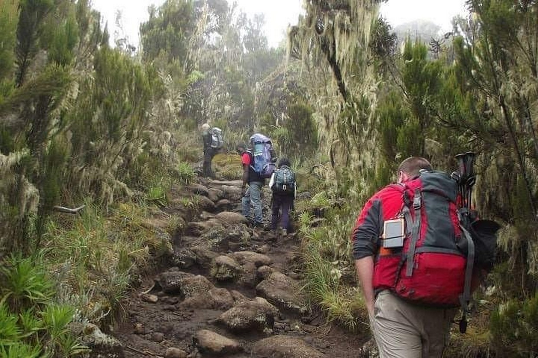 Mount Kilimanjaro Hiking Via Marangu Route 2
