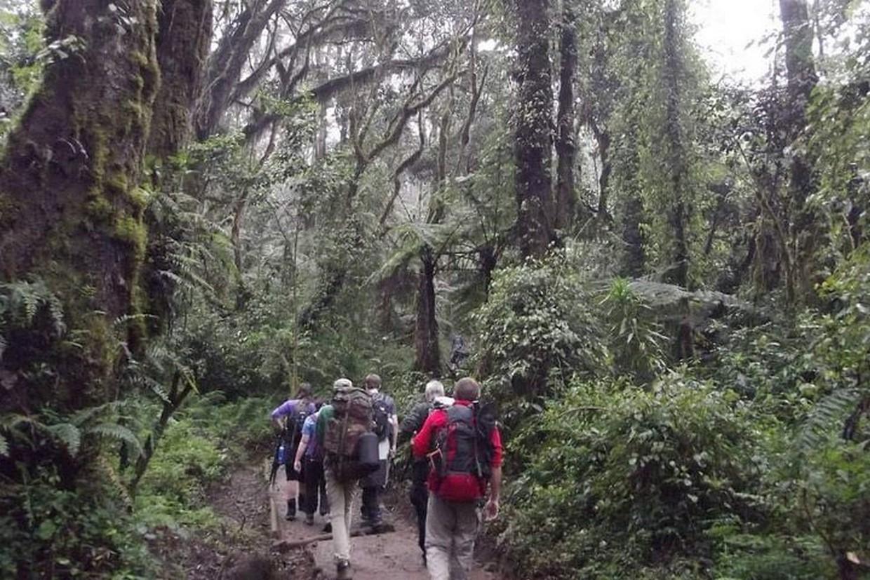 Mount Kilimanjaro Hiking Via Marangu Route 4
