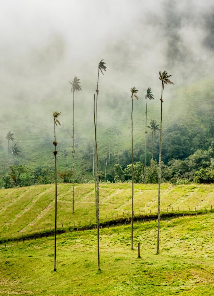 Cocora Valley in Colombia