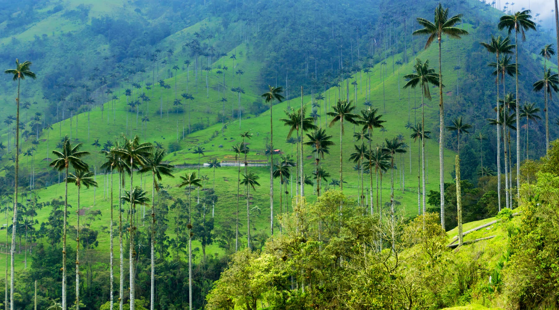 Cocora Valley, Salento – A Mysterious َAttraction in Colombia
